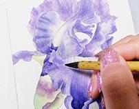 手绘水彩写实花卉