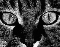 Gato domético