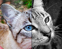Fotografia e Tratamento de Imagem