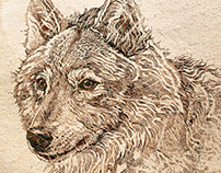 Pen & Ink Wildlife Illustrations