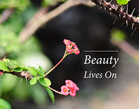 Beauty Lives On -  A Personal Film