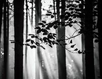 November forest 1