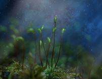 Planet Moss