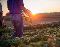 Agricultural & Farm | Sara Rubinstein