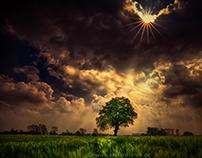 Tree under the sun