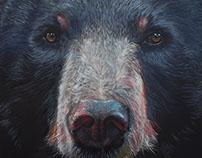 Moon Bear (Asian Black Bear) - 2017