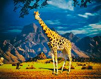 Giraffe, Sabana