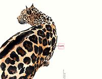 Illustration_kasiq