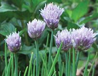 Brochure de plantas