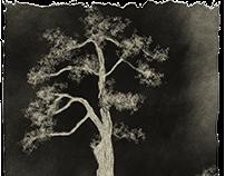 Tree Luver