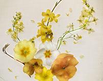 Orange & Lemon Bouquet