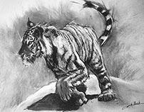 Tigre fusain