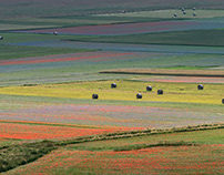 fields of castelluccio