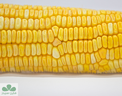 #Agriculture_#Farming_#Farm_#Corn