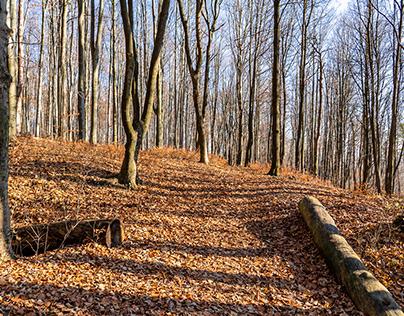 Surroundings of Kielce