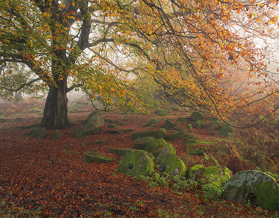 Peak District Autumnal Fog