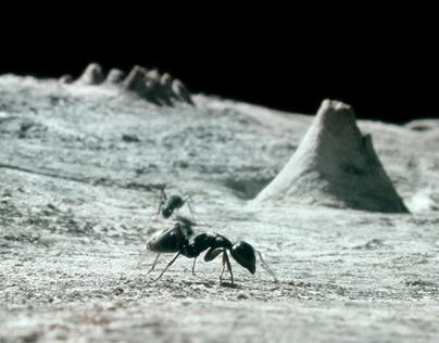 Moon Ants
