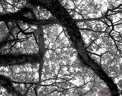 Sloka 68: One Garden, Many Branches