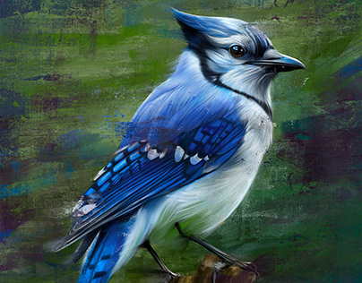 procreate painting Blue Jay Bird!