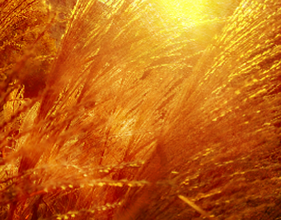 The gold of the sun