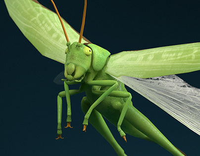 AR Insects