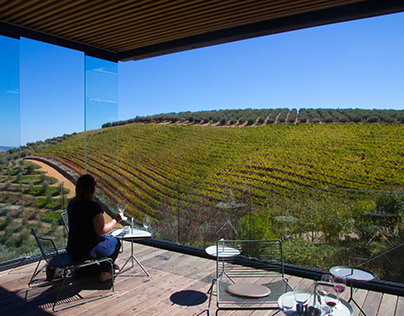 Tokara Vineyard, Stellenbosch, Cape Town, South Africa.
