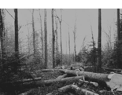 coupe de bois