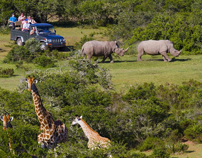 Everything to know about South Africa Safari Tour