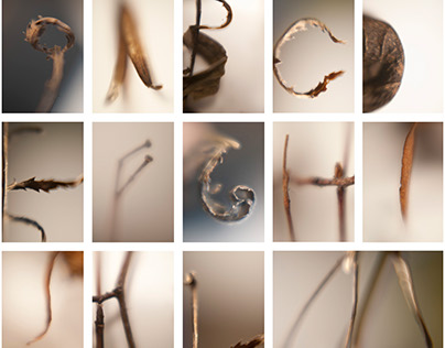 TYPO - Alphabet of Dried Plants