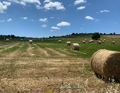 Sicily - Bales of hay in the countryside .