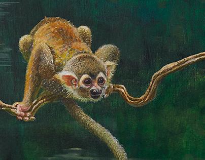 Primates - Intimate life