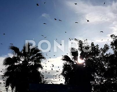 Flock Birds Flying Over Buildings In The Sky