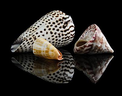 The beauty of shells