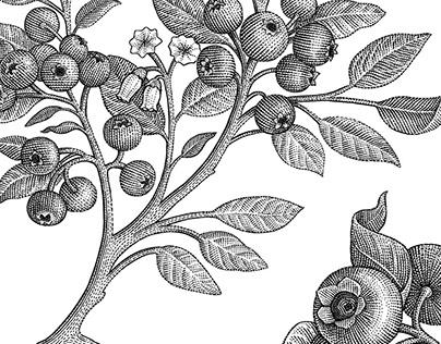 Floral & botanical woodcut illustrations