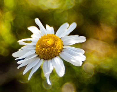 Photography Portfolio - Nature