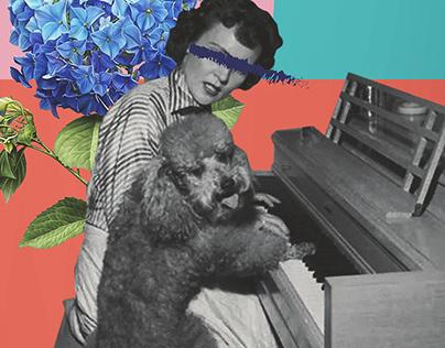 "Showcase ULM ""Animals"" (v1.2) - Art Direction + Design"