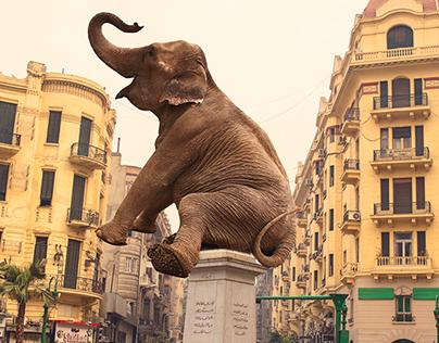 Wild Animals in Downtown