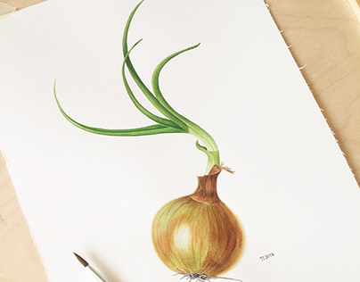 "Botanical watercolor ""Yellow onion"""