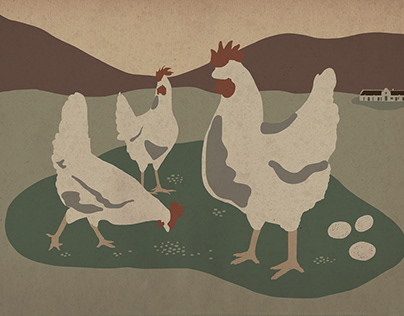 Spier chickens - illustration