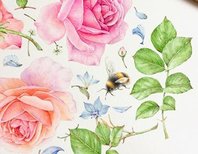 Watercolor illustartion