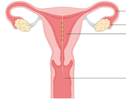 Sexual health education - drawings