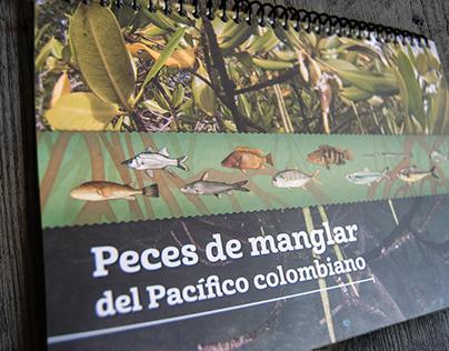 Mangrove swamps booklet - Editorial design
