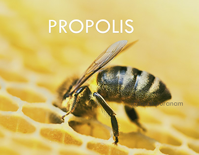 Health Care Social Promotional Video | Bee Propolis |