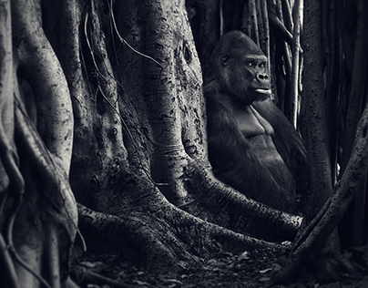 Gorilla in the Woods