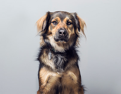 Guia Cão em Quadrinhos para ter um melhor amigo