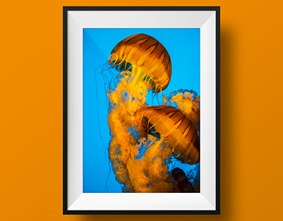 The Jellyfish Diaries