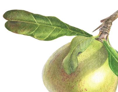 Watercolor Botanical Illustrations. Dinnerware design