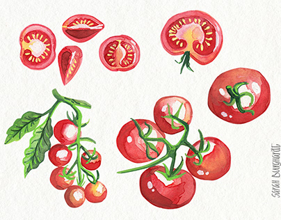 Food Illustration Watercolor Tomatoes