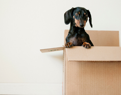 What You Can Do For Tenants During Move-In and Move-Out