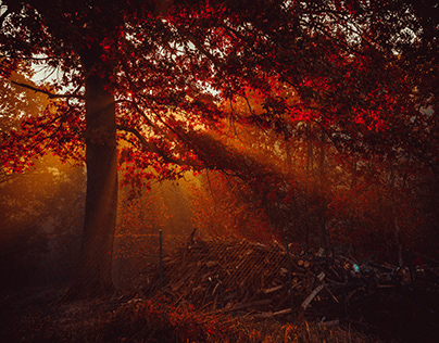 Red and light